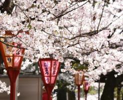 東京 桜祭り 花見 2018