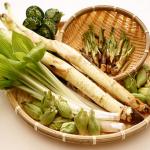 山菜 栄養