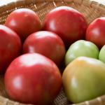 トマト 歴史 日本
