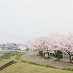 八重桜 名所 関東