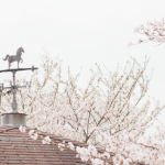 八重桜 名所 関西