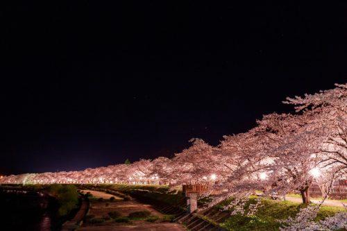 八重桜 花言葉 怖い