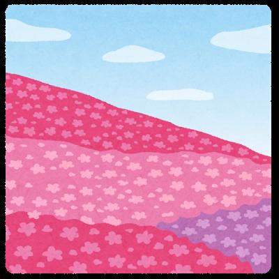 芝桜 育て方 コツ
