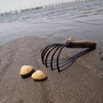 潮干狩り 砂抜き 方法