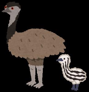 飛べない鳥 ニュージーランド オーストラリア