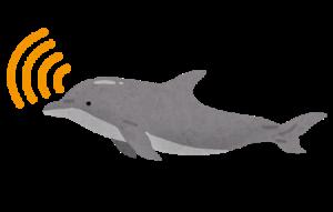 イルカ 種類 名前 鳴き声
