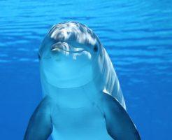 イルカ 哺乳類 進化