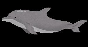 イルカ  海豚 漢字 意味 由来