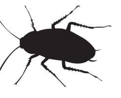 ゴキブリ 鳴き声