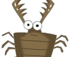 ウスバカゲロウ 幼虫 蟻地獄