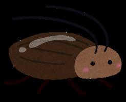ゴキブリ 寿命