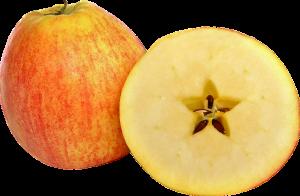りんご 消化 時間
