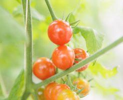 家庭菜園 水やり 植え方